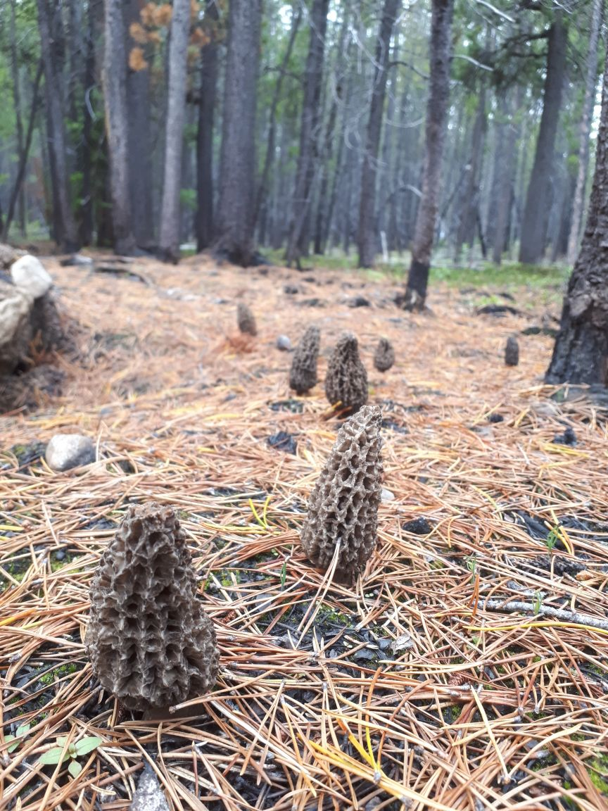 Seasonal Snapshot: Morel Mushroom Season